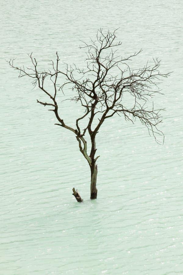 印度尼西亚万隆卡瓦普提火山湖孤树 库存照片