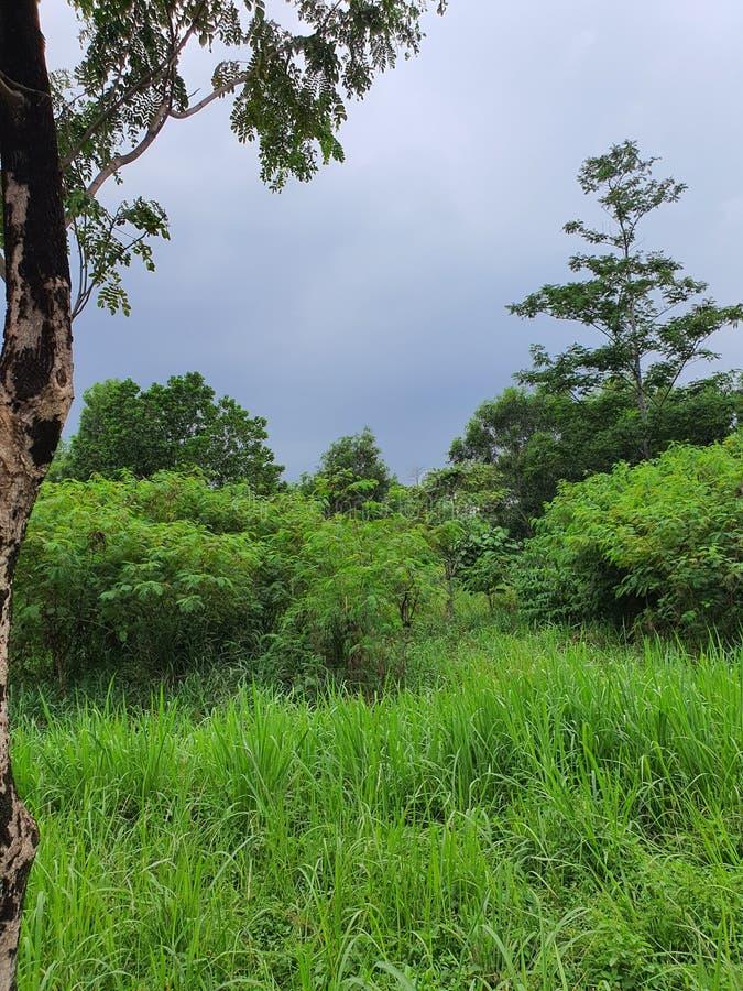 印度尼西亚丹格朗南城的美丽景色 免版税图库摄影