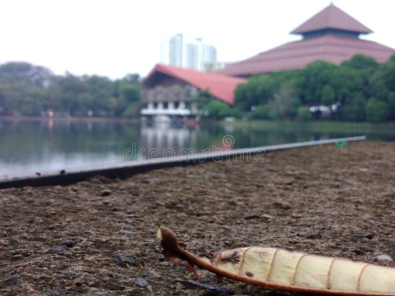 印度尼西亚大学 免版税图库摄影
