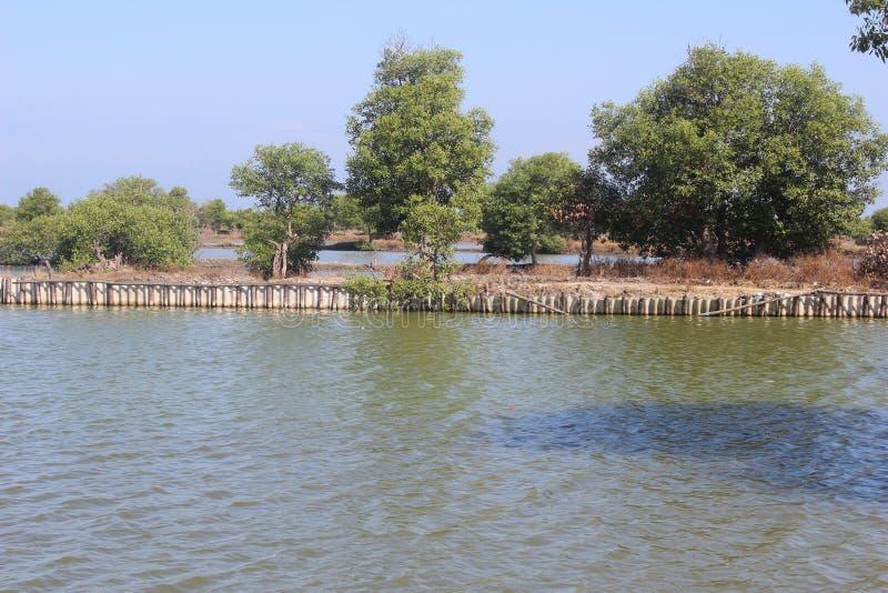 印度尼西亚西多阿霍东爪哇地区的虱目鱼渔塘 库存照片
