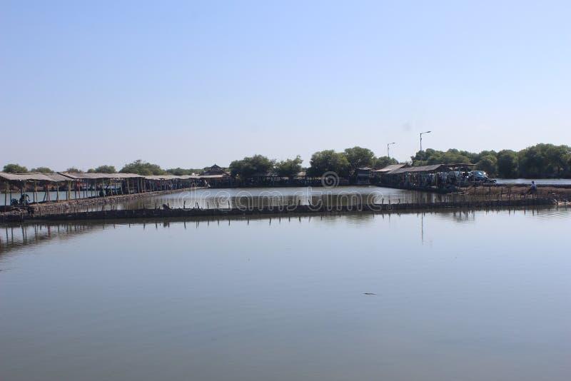 印度尼西亚西多阿霍东爪哇地区的虱目鱼渔塘 免版税库存图片