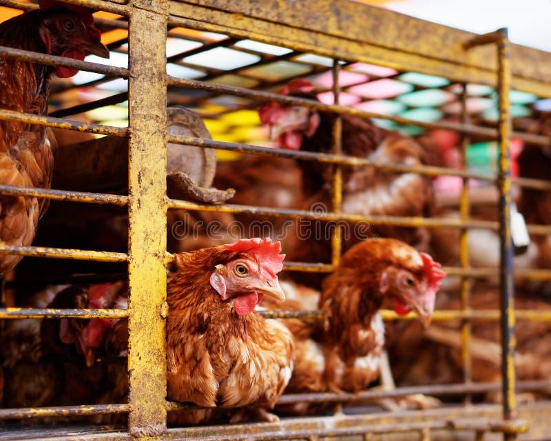 印度尼西亚-鸡笼子在市场上 免版税库存图片