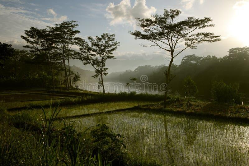 印度尼西亚 库存照片