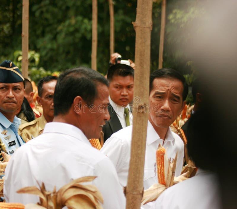 印度尼西亚Jokowi总统 库存照片