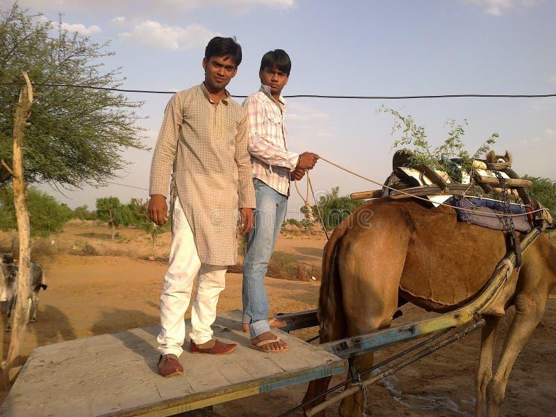 印度拉贾斯坦骆驼推车运输文化,骆驼骑马 库存图片