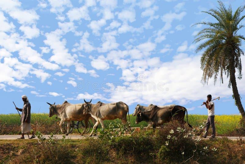 印度村庄农夫 库存图片