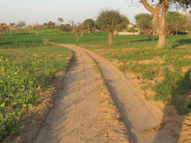 印度村庄路 免版税库存照片
