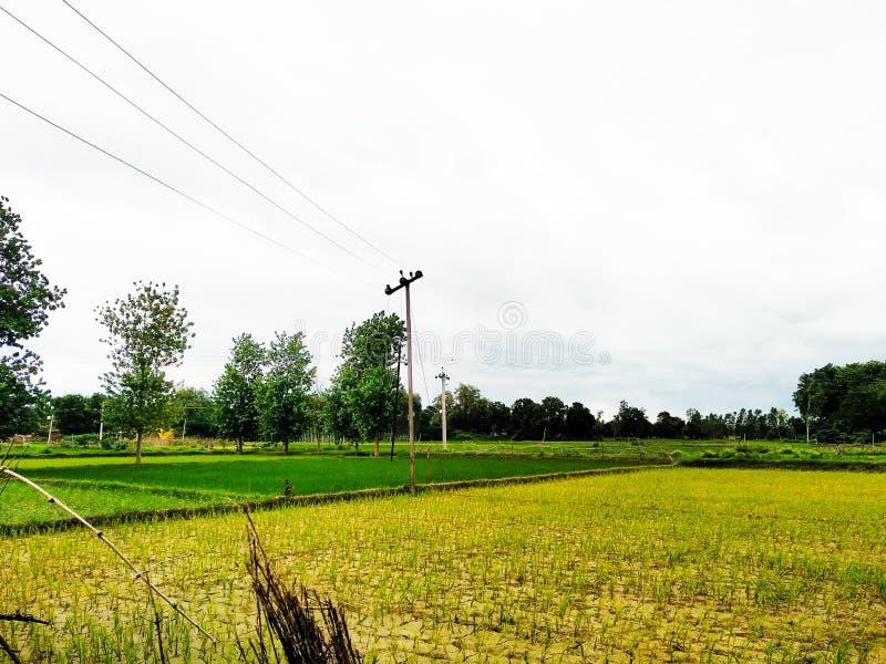 印度村庄 库存图片