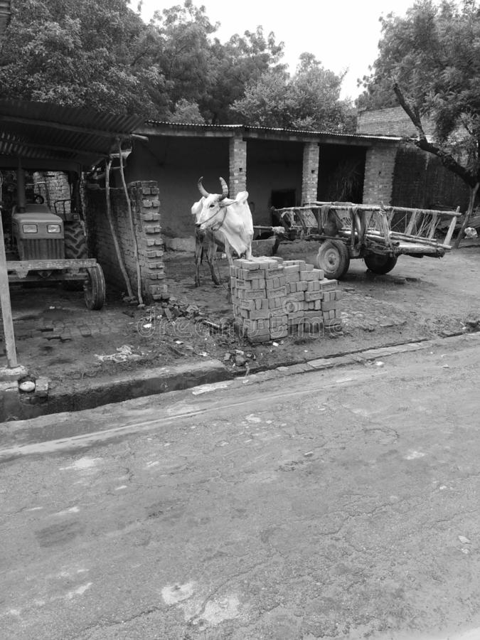 印度村庄 免版税图库摄影