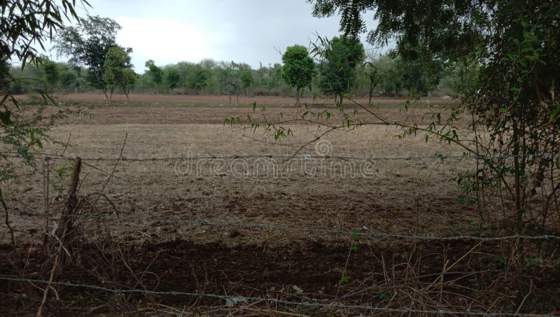 印度森林研了领域村庄发辫 免版税库存照片