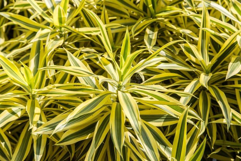 印度植物歌曲  免版税库存图片