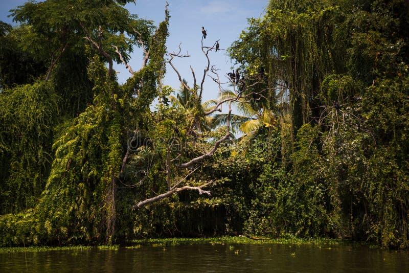印度热带河流的运河岸,阿拉普扎,喀拉拉 免版税库存照片