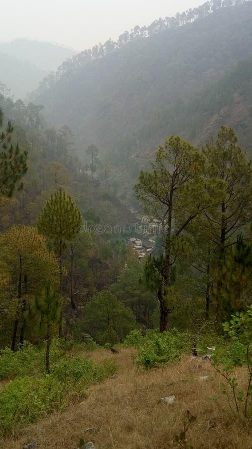 印度科比特国立公园 免版税图库摄影