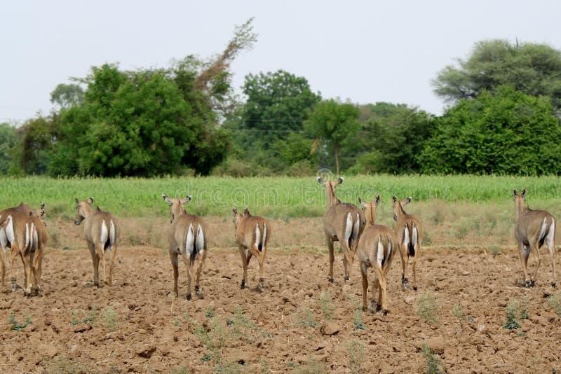 印度艾哈迈达巴德,丛林中的一群牧师 免版税库存图片