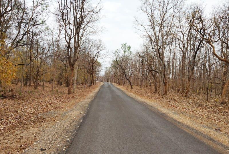 印度马哈拉施特拉邦那格普尔州际高速公路251 免版税图库摄影