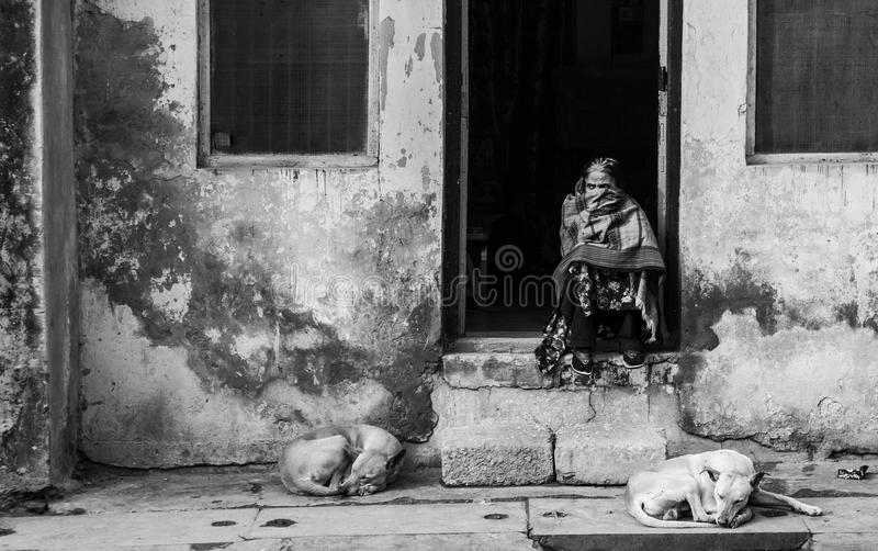 印度,德里- 2014年1月12日-印地安妇女和狗在德里街道  免版税库存图片