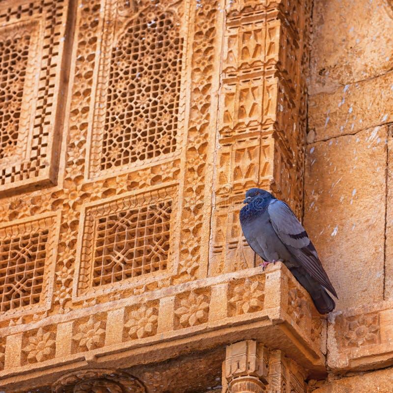 印度 鸽子疲倦拉屎,并且它基于皇家好朋友门面  免版税库存图片