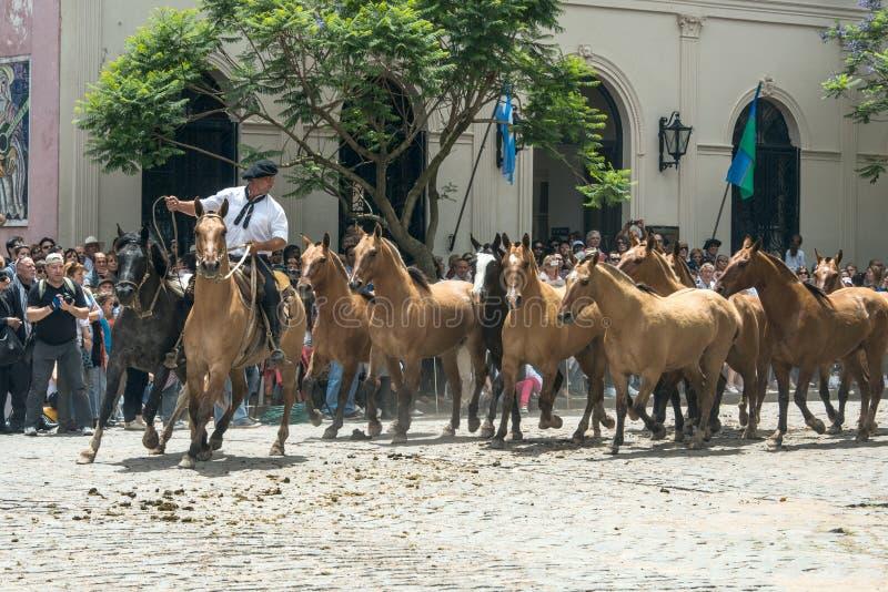 印第安人混血儿通过圣安东尼奥de Areco,省布宜诺斯艾利斯驾驶马牧群  免版税库存图片