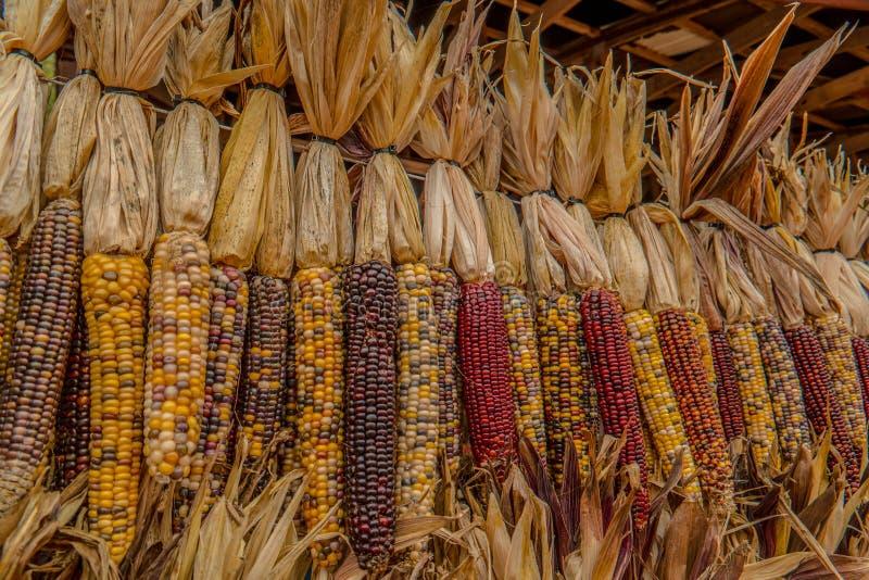 印第安玉米在秋天 库存照片