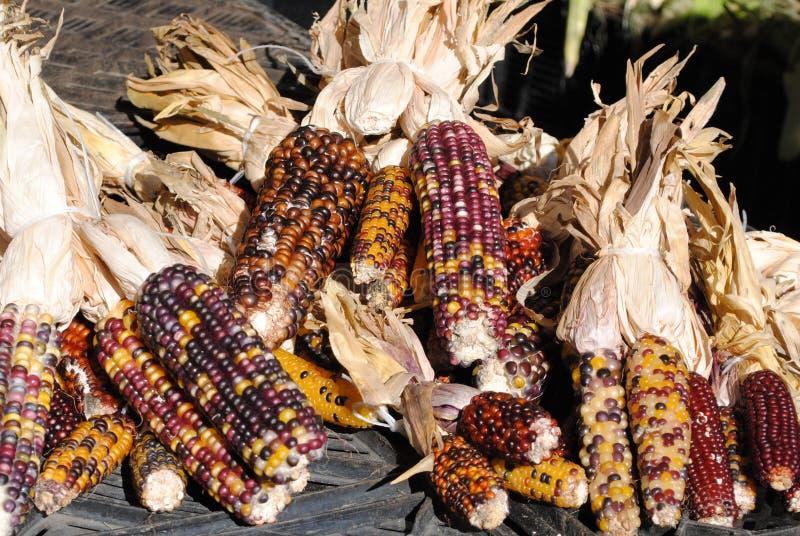 印第安玉米 免版税库存图片