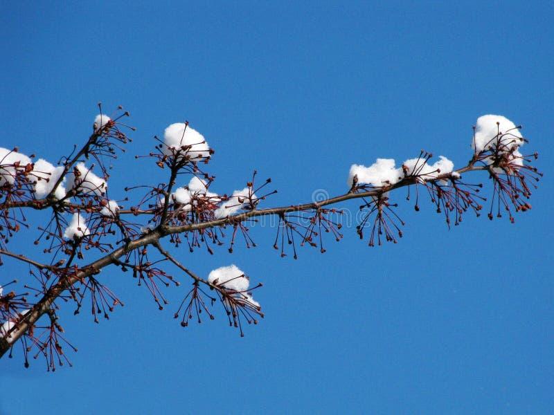 印第安纳冬天 免版税库存照片