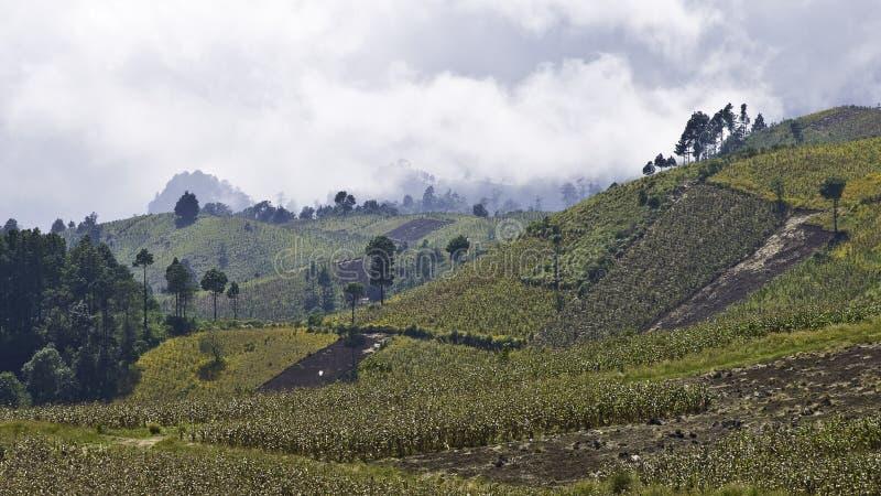 危地马拉高地 库存图片