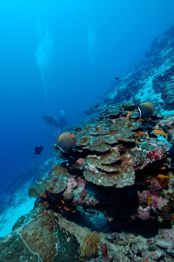 危险地美好的亚齐印度尼西亚佩戴水肺的潜水 库存照片