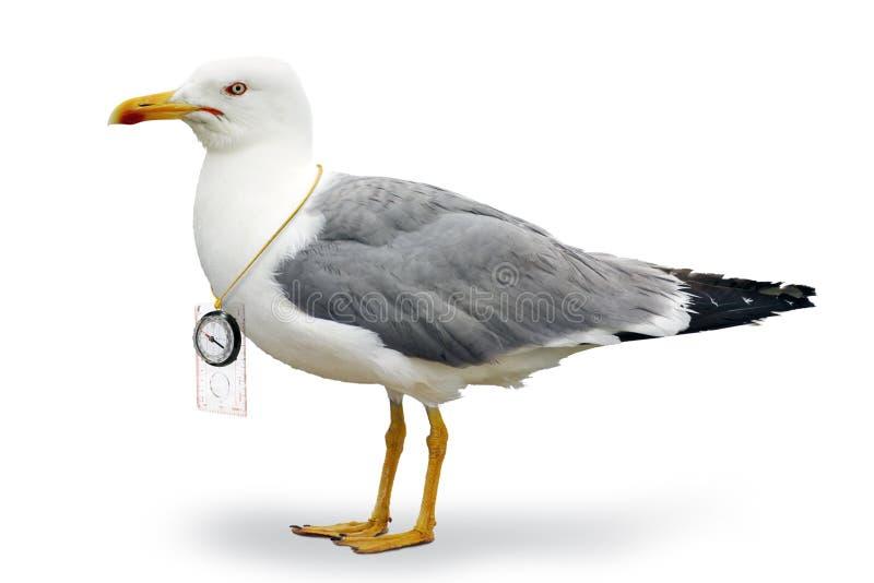 危险的海鸥 免版税图库摄影