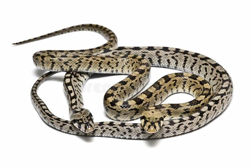 危险蛇 免版税库存图片