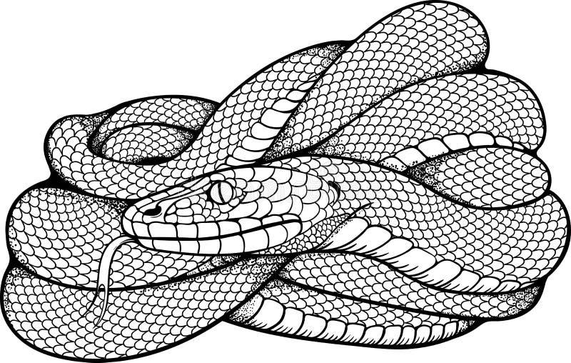 卷起的蛇的图象 皇族释放例证
