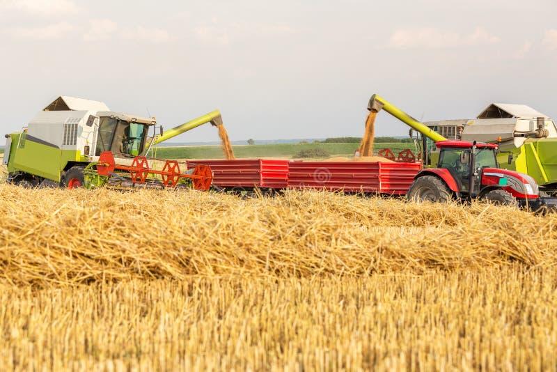 卸载麦子五谷的联合收割机入牵引车拖车 库存图片