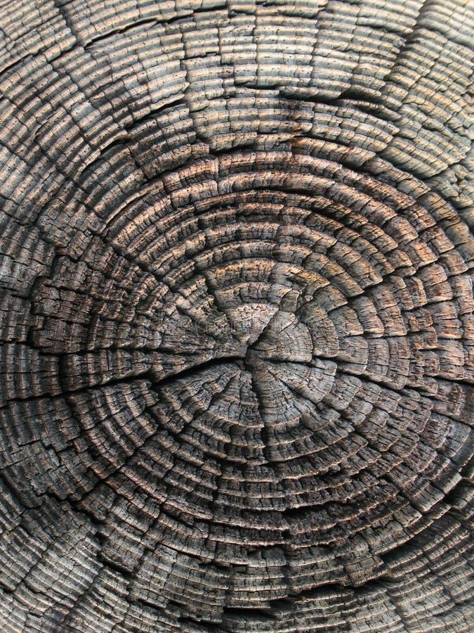 历史记录木头 库存照片