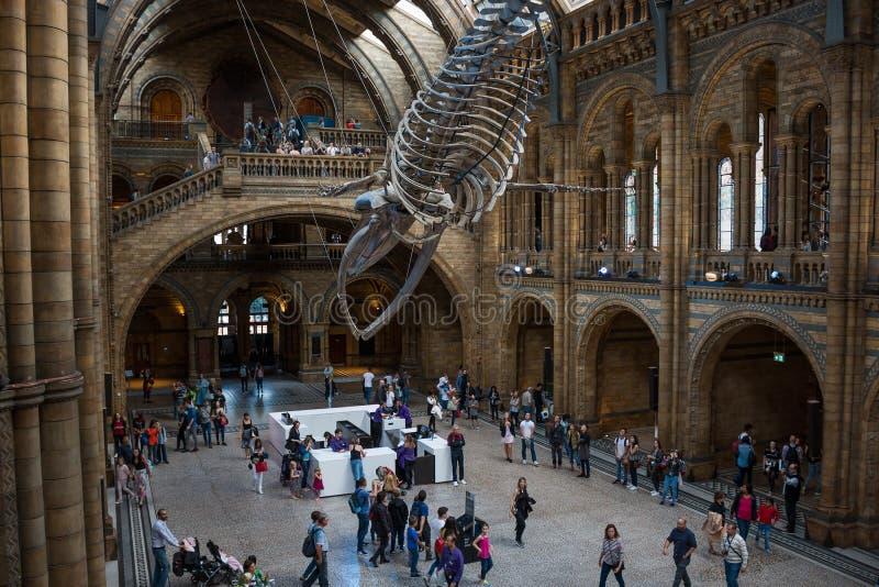 历史记录自然伦敦的博物馆 库存图片