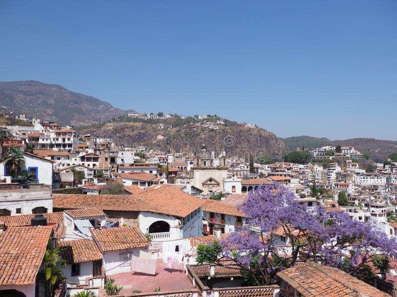 历史Taxco市印象深刻的都市风景风景有兰花楹属植物树的在墨西哥 图库摄影
