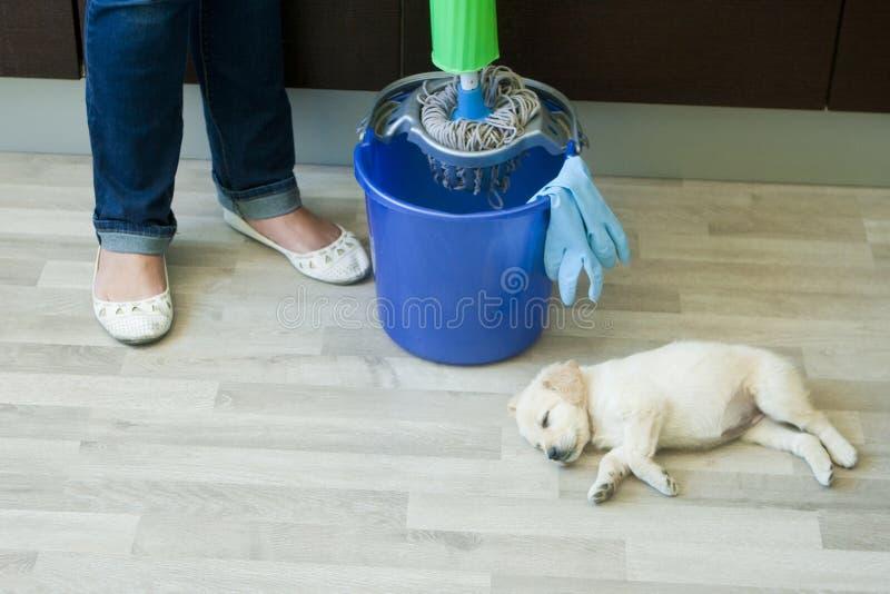 紧压拖把的妇女的脚在小狗附近 免版税库存照片