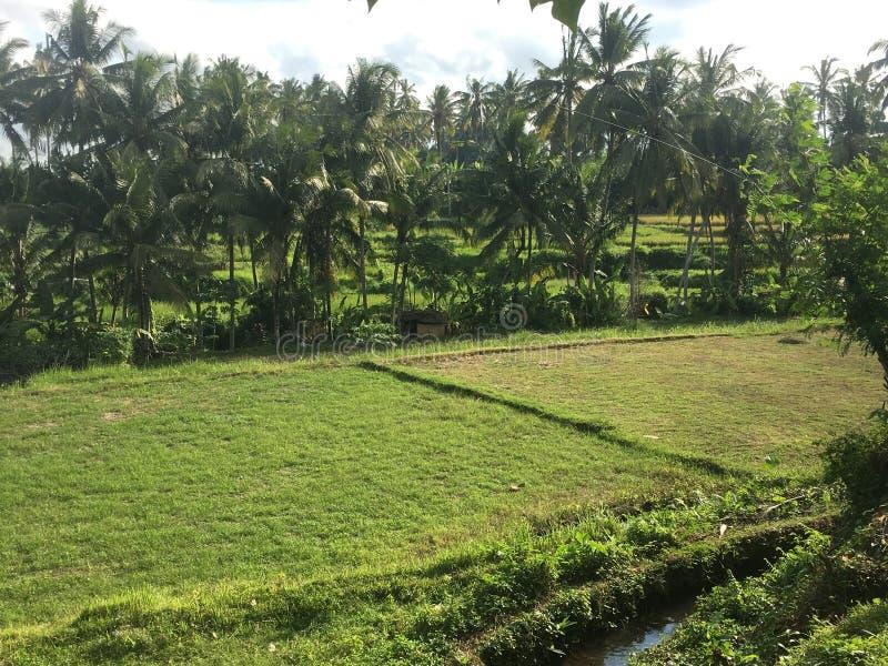 巴厘岛农场在印度尼西亚 免版税图库摄影