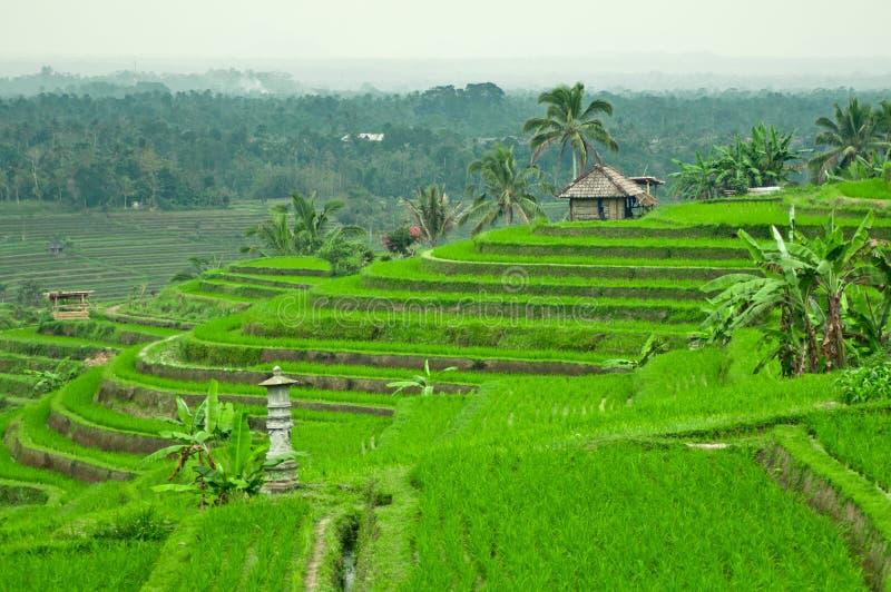 巴厘岛大阳台领域 库存照片