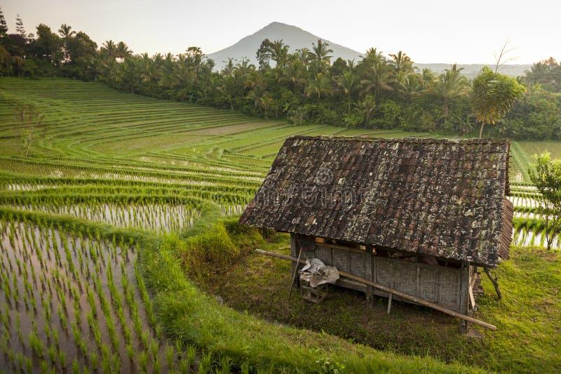 巴厘岛米领域 库存照片