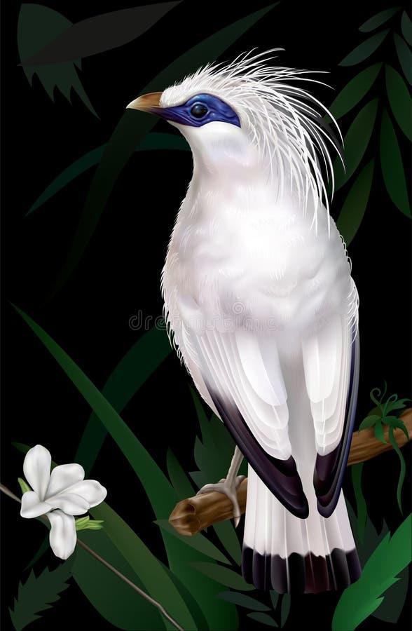 巴厘岛Myna Leucopsar rothschildi 向量例证