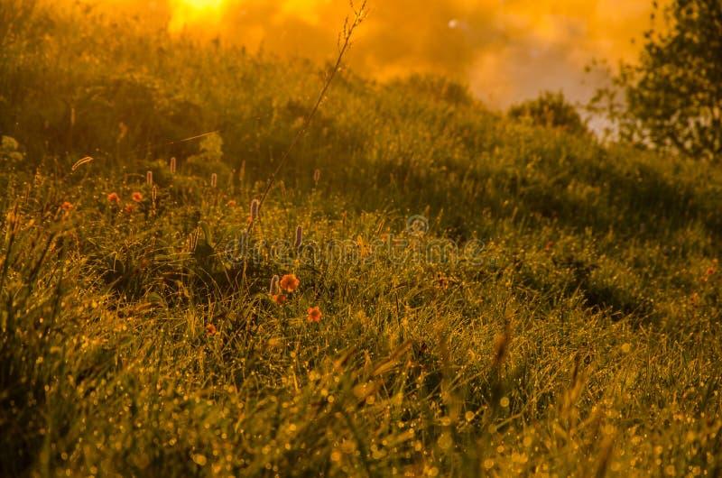 厚实的早晨雾在夏天森林里 库存照片