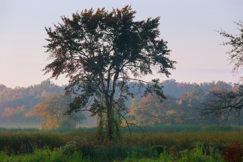 厚实的早晨雾在池塘的森林里 在夏天大雾的早晨风景 库存照片