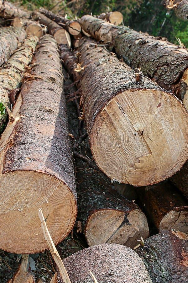 厚实的树背景森林宿营建筑设计基地的树干长的概略的概略的弯的末端 免版税库存照片