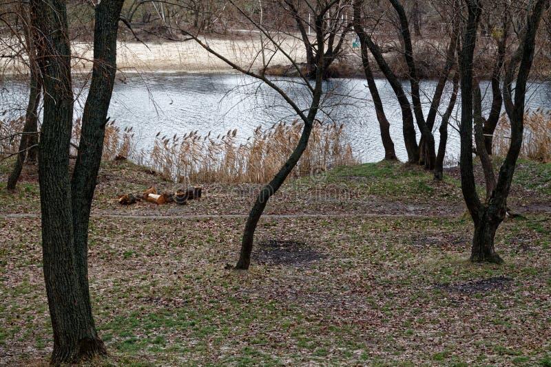 厚实的湿树干、森林或者公园在湖附近,有益于背景 库存图片