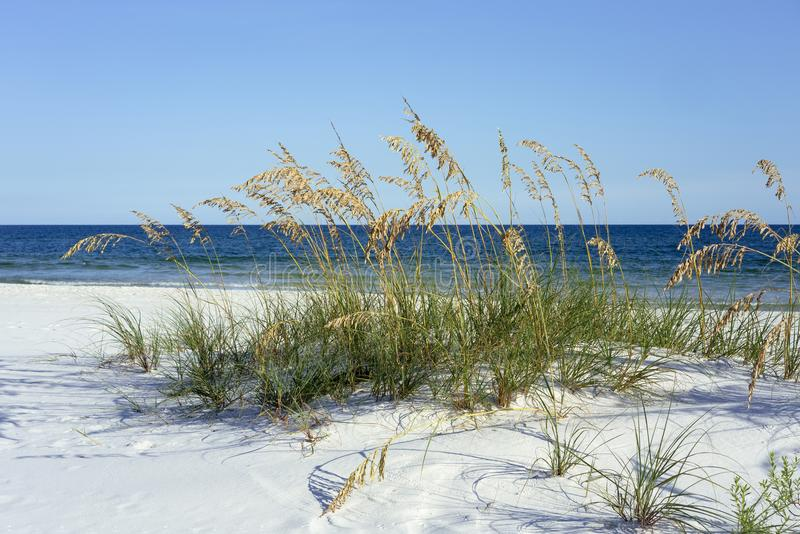 原始佛罗里达狭长的土地海滩用海燕麦在夏天 免版税库存照片