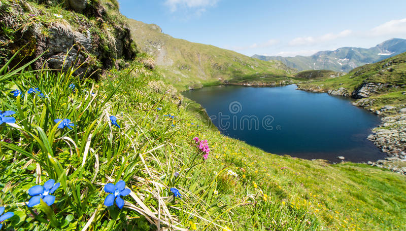 原始冰川湖在阿尔卑斯 免版税库存图片