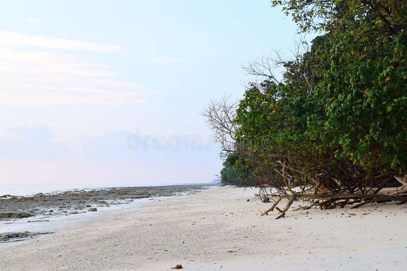 原始和平静的白桑迪和多岩石的海滩与沿海种植园- Kalapathar, Havelock,安达曼-自然本底 免版税图库摄影