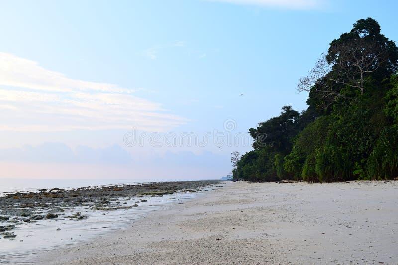 原始和平静的白桑迪和多岩石的海滩与沿海种植园- Kalapathar, Havelock,安达曼-自然本底 免版税库存图片