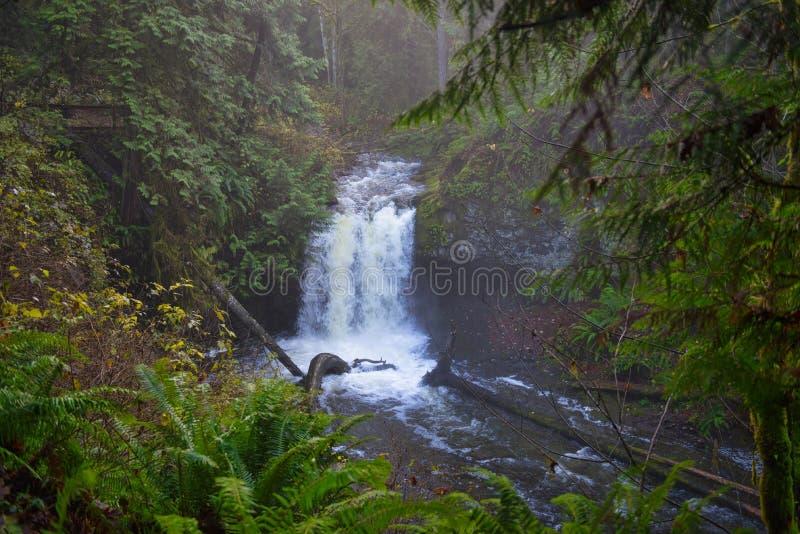 原始林雨林在长袜小河瀑布公园在Vanco 免版税库存图片
