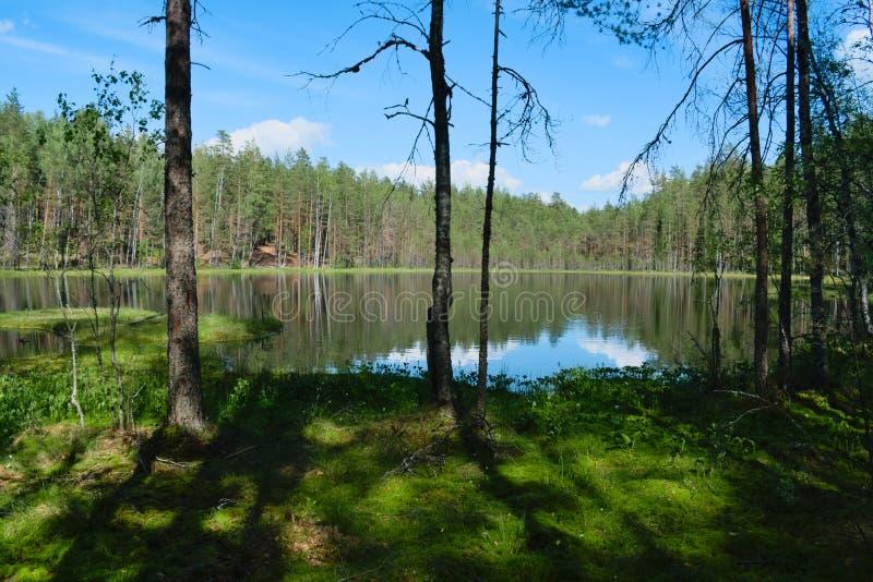 原始森林湖,在森林里丢失了 免版税库存图片