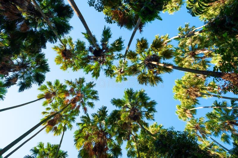 原始森林,禁令粪区,乌隆府泰国,绿色树梢选择聚焦,n 图库摄影